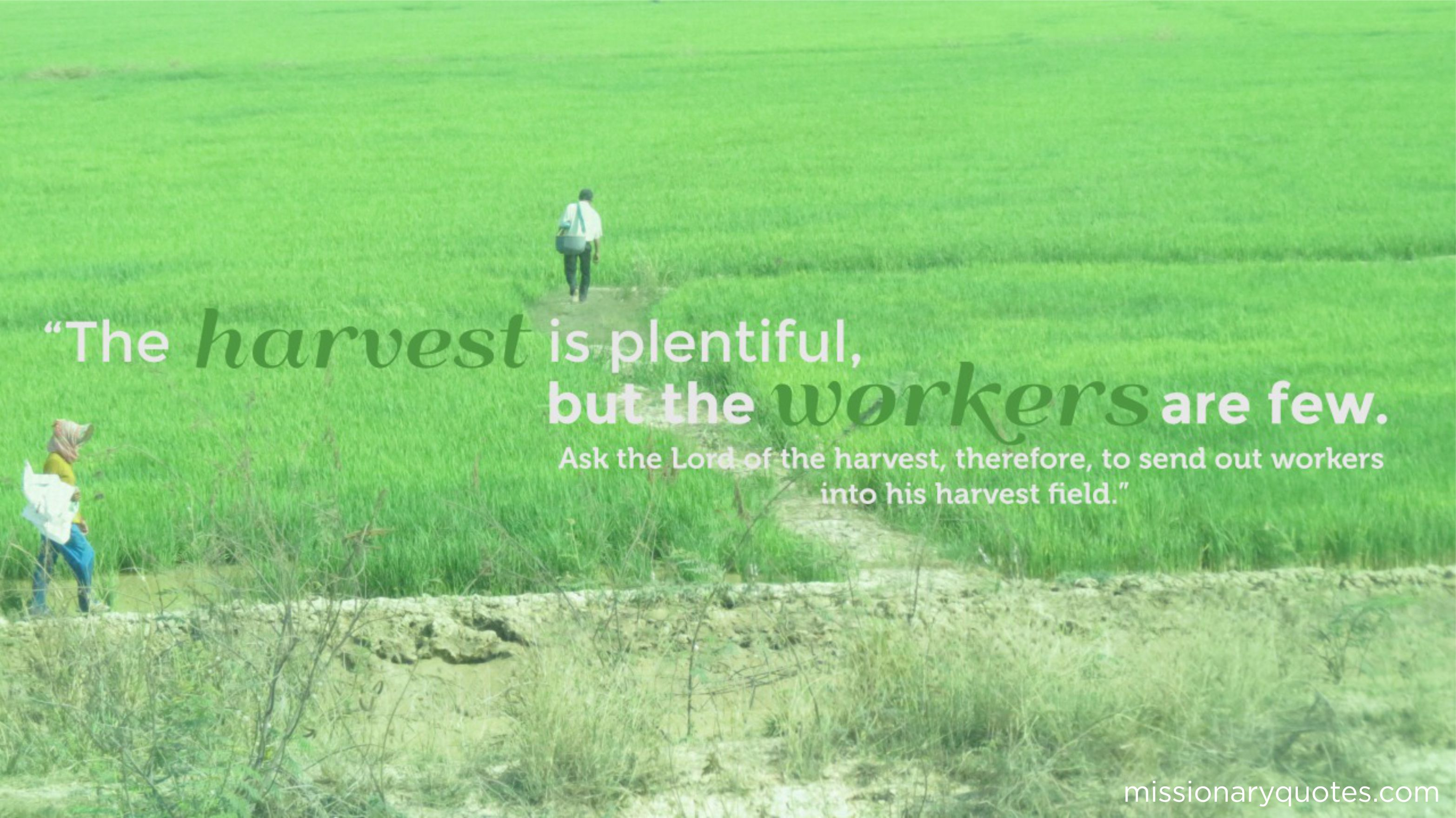 The Harvest is Plentiful, the workers are few
